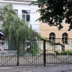 В Смоленской области ураган «скосил» более двух десятков деревьев