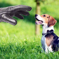 В смоленском райцентре стали воровать породистых собак
