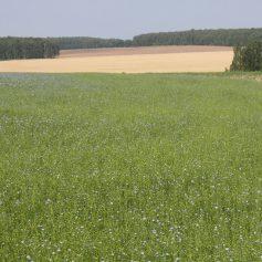 Назначение системы перераспределение между земельными участками