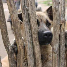 Группу смоленского приюта для собак «Верность» заблокировали ВКонтакте