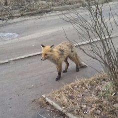В 11 районах Смоленской области обнаружили бешенство животных