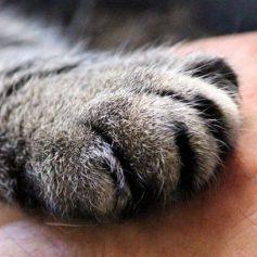 О выжившей после расстрела кошке из Смоленска рассказали на ТВ