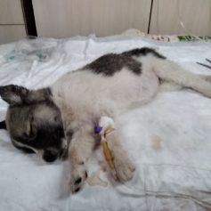 В Смоленске частному собачьему приюту срочно требуется помощь