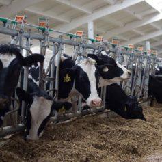 Смоленским производителям молока возместят большую часть затрат на модернизацию ферм
