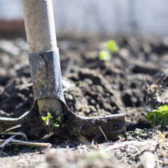 10 секретов урожайного сада и огорода