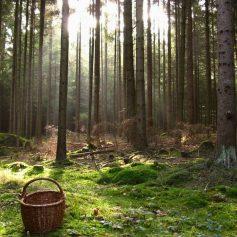 В лесу под Смоленском нашли бабушку с двумя детьми