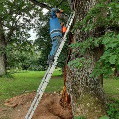 В «Хмелите» лечат старинные деревья