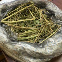 Смолянин попался на сбыте марихуаны