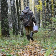 В Смоленском районе в лесу заблудился 66-летний мужчина