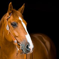 Лошадь сбросила рабочего в Смоленской области – госинспекция труда