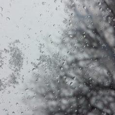 В Смоленской области последняя среда ноября будет облачной и мокрой