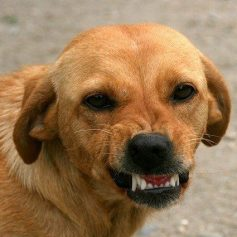 Жительница Смоленска рассказала о нападении стаи собак на Королевке