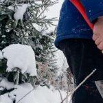 В Смоленской области усилили охрану хвойного молодняка