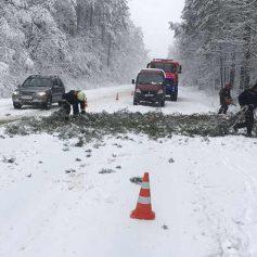 В Смоленске из-за непогоды упали два дерева
