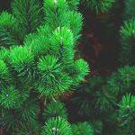 Жителей Смоленска призвали правильно утилизировать елки