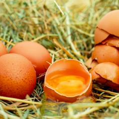 Линия для выпуска мытых яиц появилась на смоленской птицефабрике