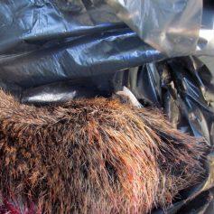 Смолянина задержали на М1 с головой животного в багажнике