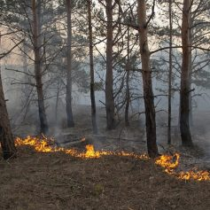 На Смоленщине официально начался пожароопасный сезон