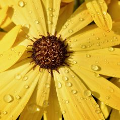 4 августа в Смоленской области возможны кратковременные дожди