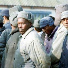 Под Смоленском африканские мигранты получили реальный срок за пересечение границы