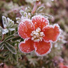 На Смоленщину пришли первые заморозки