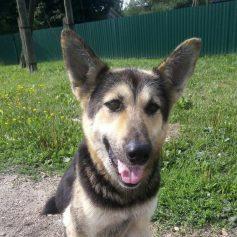 Полиция начала проверку сообщений о смоленском живодёре, который убил собаку на глазах у детей