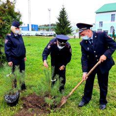 В Смоленске транспортные полицейские вместе с общественниками присоединились к акции «Зеленая Россия»