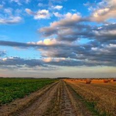 В Гагаринском районе в сельхозоборот ввели неиспользуемый земельный участок
